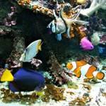 aquarium-ocearium-croizic-carré