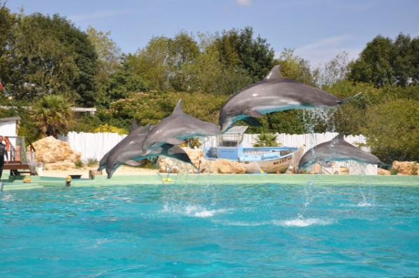 Plan te sauvage 150 esp ces animales en semi libert for Parc sauvage 78