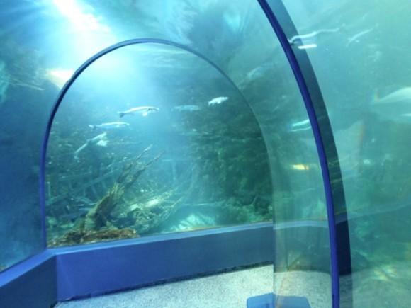 aquarium-ocearium-croisic