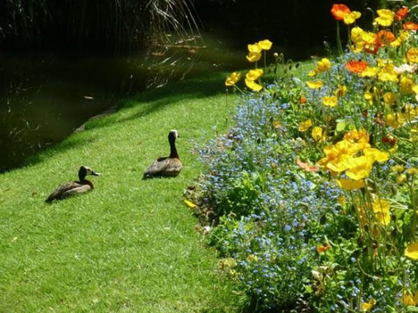 jardin-des-plantes-canards