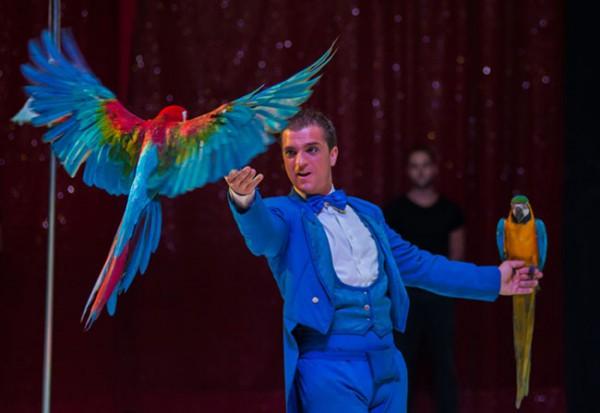 cirque-nantes-noel-perroquets