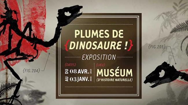 Plumes de dinosaure Muséum d'histoire naturelle